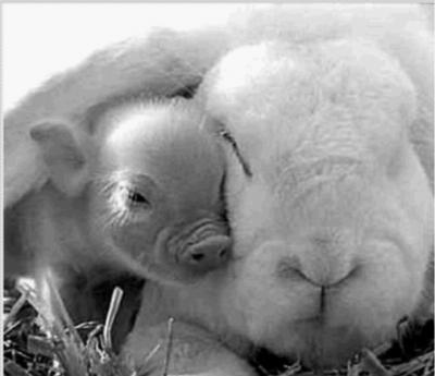 可爱小巧的猪宝宝