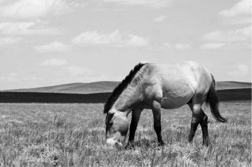 马类动物图片