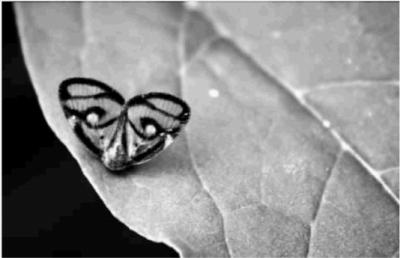 一只漂亮的蝴蝶在树叶上休息,看上去像个人脸面具特别可爱.