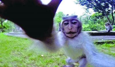 头像变动物相机