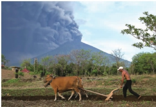 名农民在犁地,阿贡火山喷出火山灰. 新华社 图-巴厘岛火山喷出高
