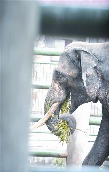 大象影子简笔画