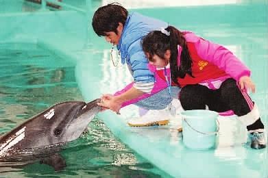1月25日,长沙海底世界,三湘华声全媒体小记者邹婕亲密接触小海豚.