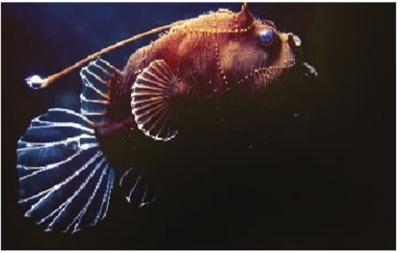 澳大利亚发现多种古老海洋动物